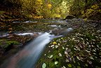 A long exposure blurs the waters of the Row River on a beautiful fall day Oregon, USA