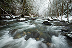 The icy waters of the Row River rush past snow-covered evergreen forests, Oregon, USA