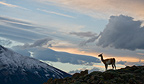 Guanaco at the sunset on the mountains of Torres del paine, Chile