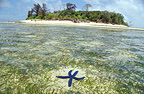 Green Island and Royal tile starfish, Australia