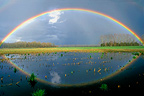 Rainbow and its reflection in a flooded field, Switzerland