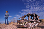 Allosaurus skull & scientist, Wyoming, USA