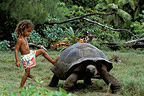 Child playing with an Aldabra giant tortoise Seychelles