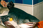 Porbeagle head on a fish stall Le Tr�port France