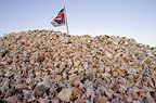 Heap of Conch shells from conches that have been consumed in abundance, Bonaire, Caribbean