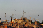 Common Swifts flying over rooftops Montpellier France