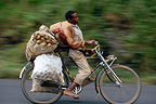 Man on bicycle carrying bags of potatoes Rwanda