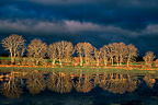 Tree reflections under stormy light Auvergne France