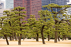 Park and buildings in the center of Tokyo Japan