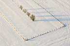 Alignment of trees in a field covered with snow in the Moselle, France �