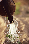 Paerson watering seedlings using water-bottle in Dougoukouna Mali