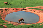African elephants at the water point East Tsavo Kenya