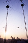 Long-tailed macaques climbing to antennas