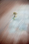Aerial shot of a lonely tree in the middle of a naked field, France