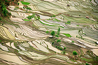Rice plantations of mountain Yunnan China