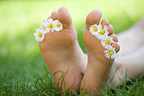 Feet decorated with daisies in the grass in spring