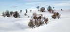 Snowy trees on the plateau of Retord in winter France