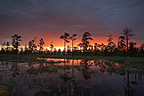 Sunrise on a peat bog of Fulufjället NP Sweden