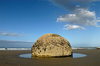 Hemispheric rock on a beach of the Otago New Zealand