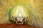 Portrait of a caterpillar of Tussock moth Loiret France