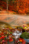 Fall leaves drifting along the river Areuse Switzerland