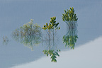 Flooded riverside trees El Grado reservoir Spain