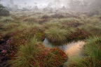Bog in the fog in the morning Vosges France