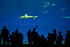 Sharks and Tunas Monterey Bay Aquarium California�USA