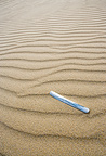 Jackknife clam shell on a sandy beach Dunnet Bay Scotland