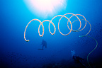 Spiral Wire Coral floating in open water Gulf of Thailand