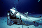 Shark handler embracing Caribbean reef shark in hyptonic trance Bahamas