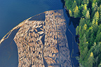 Logs floating in a park in contention British Columbia