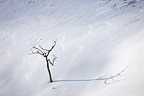 Tree and shadow in snow Hokkaido Japan