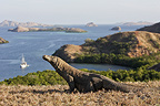 Komodo dragon and Sunda Islands National Park Komodo� (Komodo dragon)