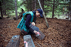 Biologist setting traps for American Red squirrel Yukon  (American Red Squirrel)
