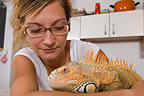 Owner looking tenderly at her tamed Red Iguana