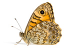 Wall Brown on white background