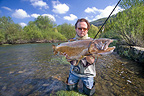 Very big wild brown trout taking fly Doubs Franche-Comte France (Brown trout)