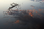 Dead branch floating and cloud reflection on water Finland