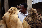 Seller of Voodoo items displaying animal skins Benin