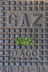 Grass pushing through a gas grid Paris�France