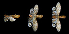 Different views of a Lantern fly in studio