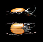 Close up of a Beetle