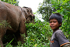 Young keeper and into the forest El�laphant Cambodia (Asian elephant)