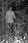 Man who killed a gorilla silver back at close range Congo (Western lowland gorilla )