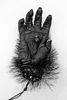 Hand of a Gorilla silver back killed at close range Congo� (Western lowland gorilla )