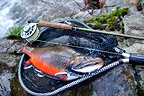 Brook trout male in a net and fishing rod on rock France (Brook trout)