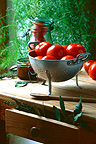 Harvest of tomatoes for conserves