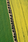 Aerial view of blooming rapeseed and green corn France