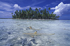 Blacktip reef sharks in Rangiroa Lagoon French Polynesia� (Blacktip reef shark)